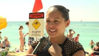 Download Jellyfish sting treatment developed by University of Hawaii researchers Video