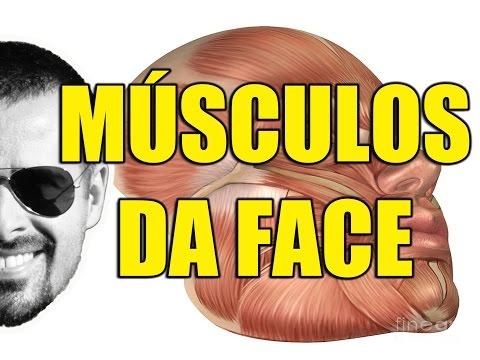 Músculos da Face: Mímica ou Expressão Facial - Anatomia Humana - Sistema Muscular - VideoAula 099