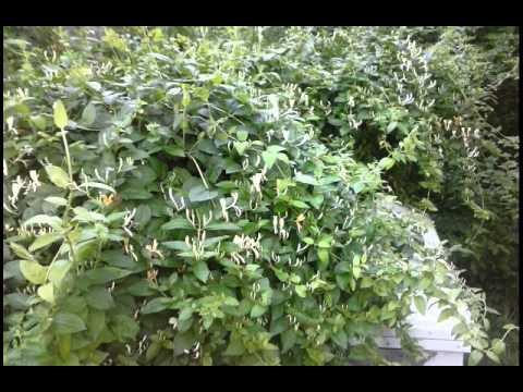 Great eBay Plants ! raygrowtx, Link in description