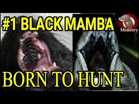 Black Mamba: Born to Hunt | Episode 1- The Journey Begins