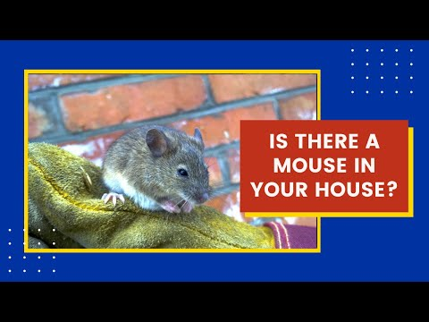 Mouse in the House? Learn How to Get Rid of Mice & Rats.