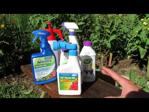 How Does Neem Oil Work, Insect Examples & Making Your Own Neem Oil Spray: Save Money! - TRG 2014