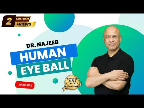 The Human Eye - Structure & Function