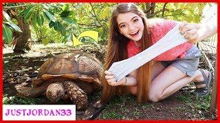 Tortoise Picks My Slime Ingredients / JustJordan33