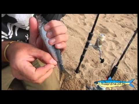 Shad Bait Up with Craig Sinclair