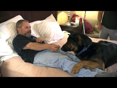 Watch This Super-Dog-In-Training Learn To Wake This Man From Night Terrors