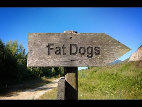 Easy Diet For Your Fat Dog!