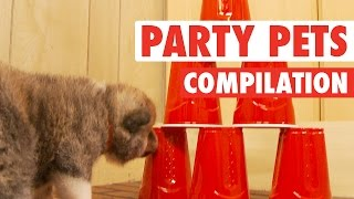 Party Animals Go Hard || Party Pets (Animal Compilation)