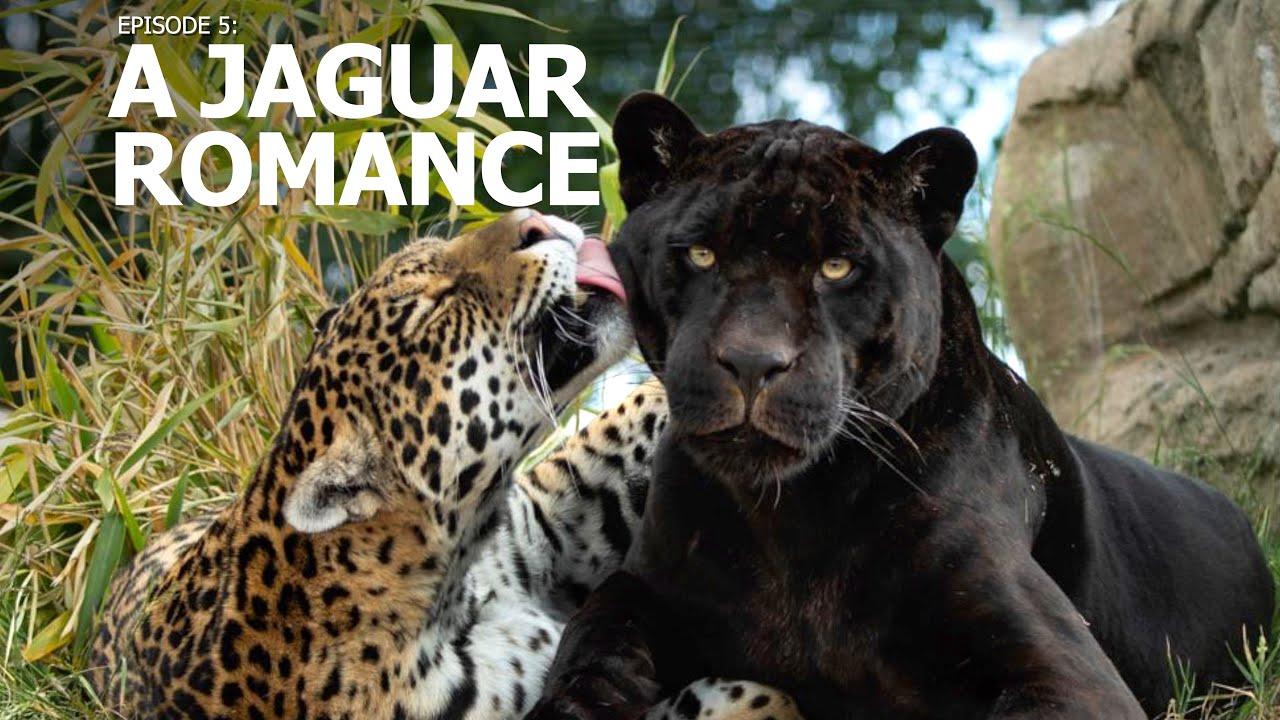 """A Perfect Day   Ep 5: """"A Jaguar Romance"""""""