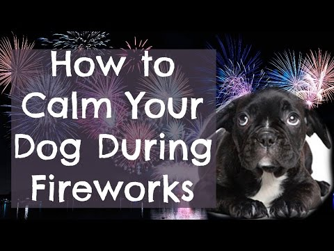 How To Calm A Dog During Fireworks