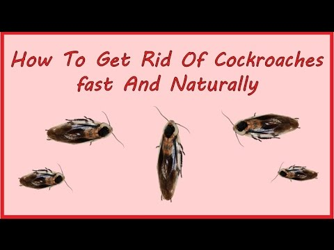 How To Get Rid Of Cockroaches fast And Naturally