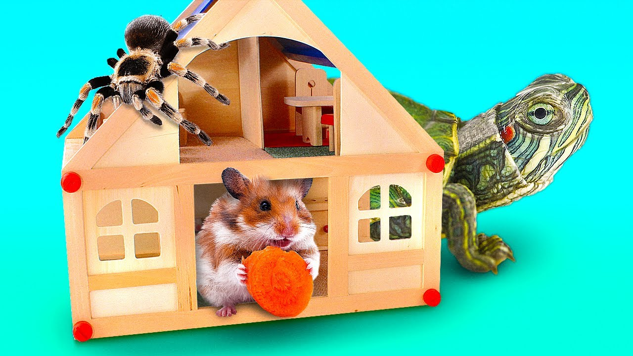 Amazing DIY Homes for Turtle, Hamster or Spider