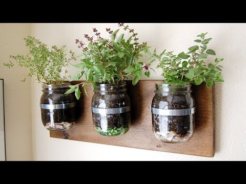How to Grow Basil in a Mason Jar