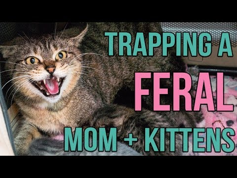 Reuniting a Feral Cat and Her Kittens!