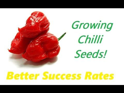 How To Germinate Chilli Seeds & Indoor Grow Tent Plants