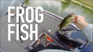 Bass Crushes Frog