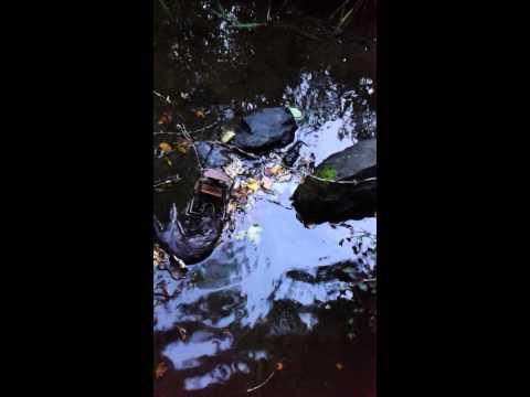 September mink no 1