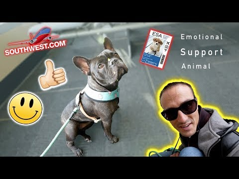 Comprehensive Review: Flying with a French Bulldog (Emotional Support Animal) on Southwest Airlines
