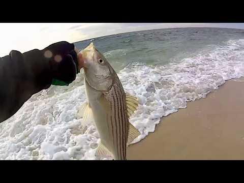 Beach hopping for late Fall Run (diaper)Stripers - Long Island, NY