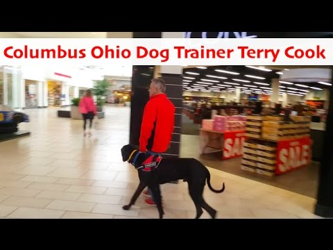 😮 Top Columbus Ohio Dog Trainer Terry Cook | Public Access Training With Dakota a Great Dane Mix