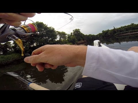 Backwater Bass Fishing For Healthy Bass!!