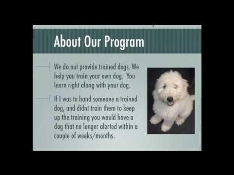 Diabetic Alert Dog Training Fundamentals - Free Advice