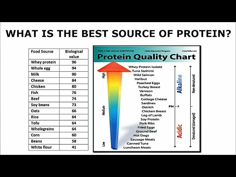 What is the best source of protein from a biological perspective?