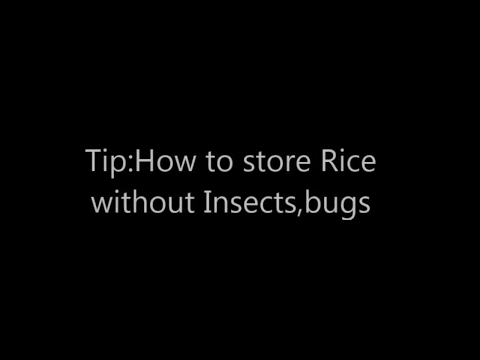 DIY Tip:How  to Get Ridoff insects bugs from Rice  How to store Rice without Insects Bugs