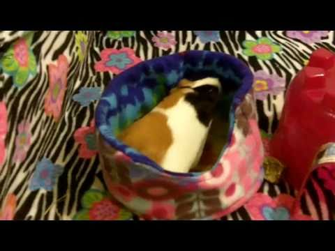 how to keep your guinea pigs warm in the winter