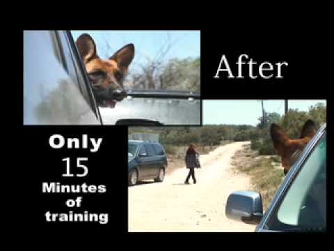No More Separation Anxiety - German Shepherd - Don Sullivan The DogFather
