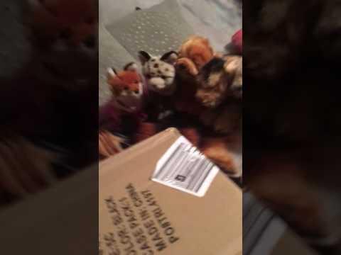 Opening my signature Siberian husky!