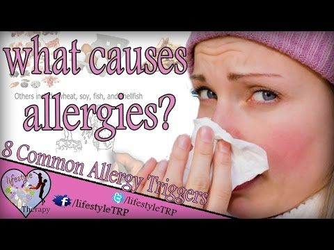 what causes allergies ? 8 Common Allergy Triggers  you must know | animated video