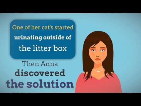 #1 Black Light Cat Urine Detector Kit