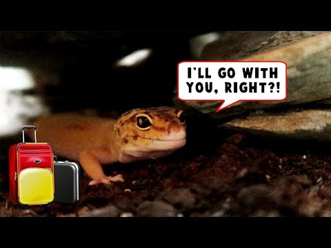 VACATION - What do you do with your Reptiles?!