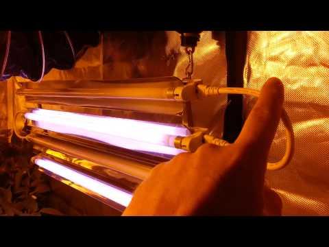 Fluro fluorescent T5 grow lighting ps2 photoponic