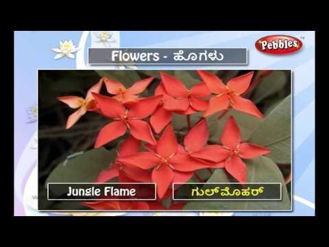 Speak Kannada Through English | Lesson - 09 Flowers