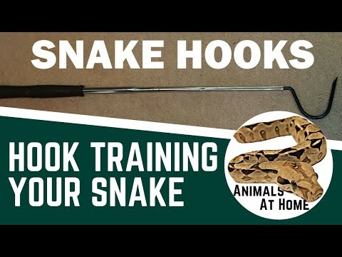 Hook Training Your Snake