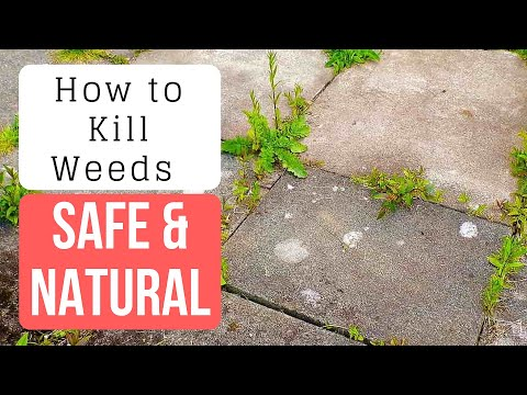 Amazing & CHEAP DIY Weed And Grass Killer