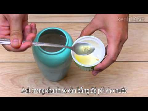 Mẹo cắm hoa tươi lâu-How to keep flowers fresh longer