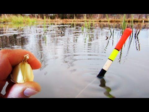 ЛОВЛЯ КАРАСЯ НА ЧЕСНОК В МАЕ! Утащило удочку! Рыбалка на пруду ...
