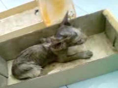 Kitten Rescue - How to remove superglue - 2/5