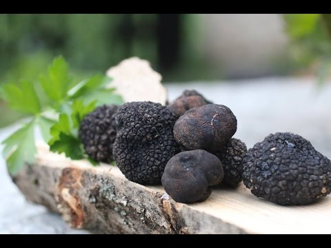 The secret of how to cook black truffles.