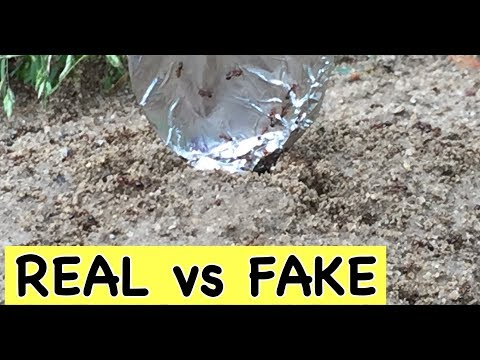 CASTING ANT COLONY WITH MOLTEN ALUMINUM   REAL VS FAKE   RIDDLES & BRAIN TEASERS!