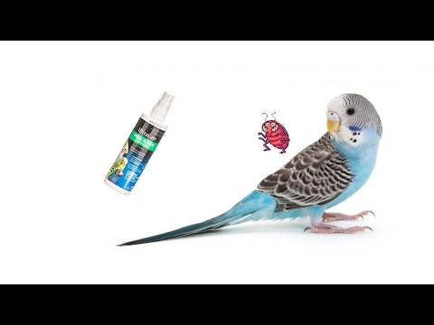 How to Cure Mite and Lice on Pet Birds