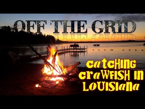 Catching crawfish in the bayous of Louisiana