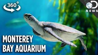 The Incredible Tech Inside California's Most Famous Aquarium (360 Video)