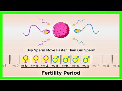 Ovulation calculator – know your most fertile days to get pregnant