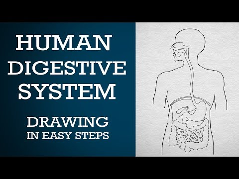 How to draw human digestive system in easy steps : 10th Biology : CBSE Syllabus : NCERT X Science