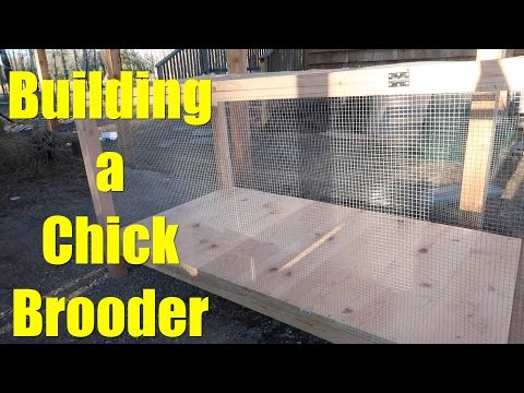 Building a Chick Brooder