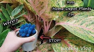 Concussion Vlog! Houseplants at Home Depot || Zoo Bamboo || Back to Lowes